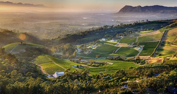 Constantia Winelands - Half Day